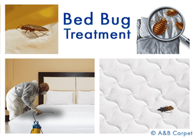 Bed Bug Treatment - Albermarle Kenmore Terrace 11226